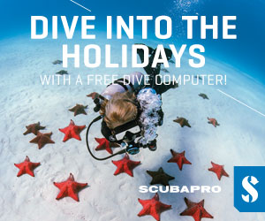 Dive into the Holidays