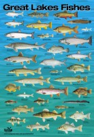 local fish courtesy poster